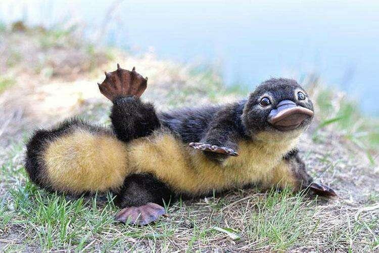 20+ забавных и шуточных фактов о животных, которые не сделают вас умнее, зато посмеётесь от души