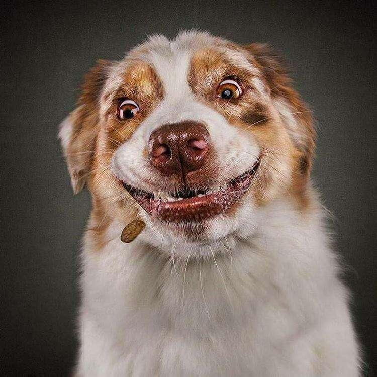 30 забавных и смешных фото для хорошего настроения, без которого никак нельзя