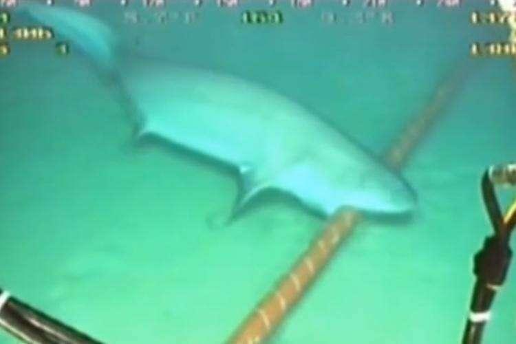10 интересных фактов о подводных Интернет-кабелях