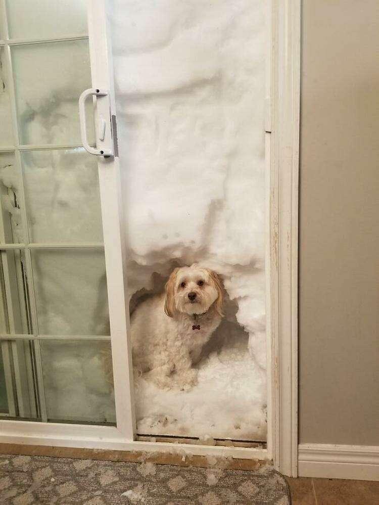 """14. """" У Скуби теперь есть современный """"снежный туалет для собак"""""""