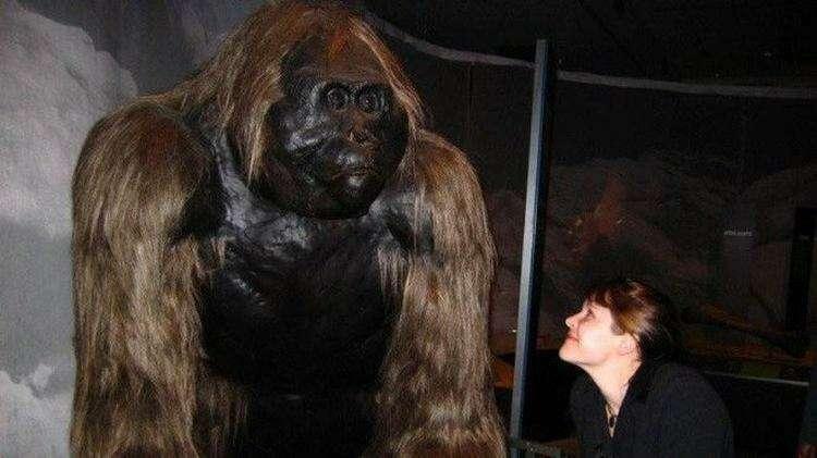 10 мифических созданий, которые существовали на самом деле