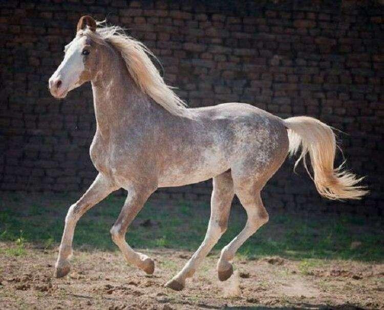 20 самых красивых лошадей в мире