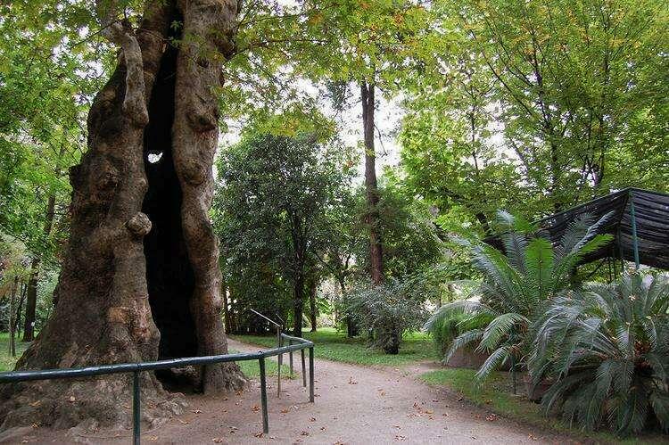 Ботанический сад Падуи