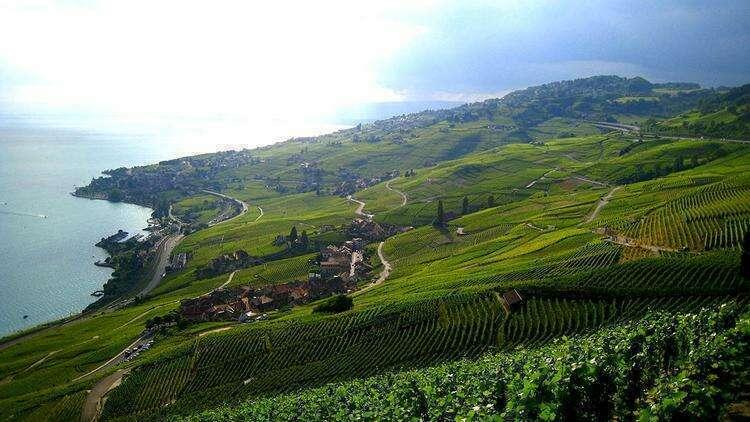 Виноградные террасы Лаво