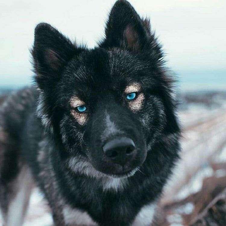 20 животных, которые не похожи на других, но в этом состоит их особенность.