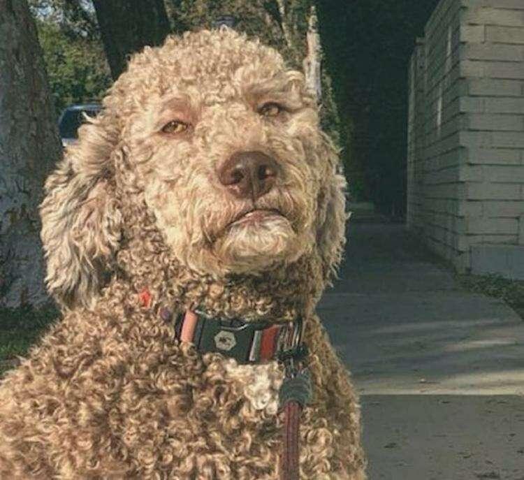 Человек в костюме собаки
