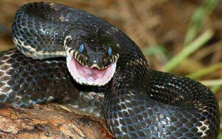 10 самых распространенных мифов о змеях