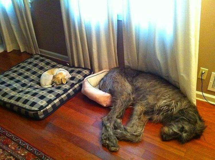 """Я думаю, я буду спать здесь..."""