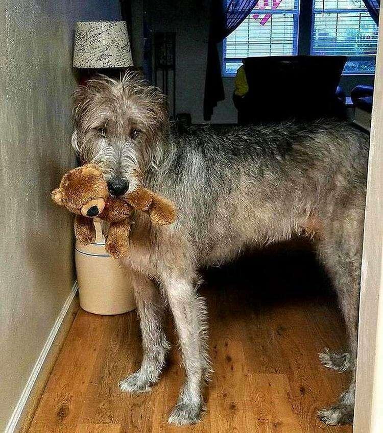 Охотнику на волков нужен медвежонок Тедди, чтобы чувствовать себя в безопасности.