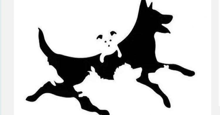Назовите количество собак на картинке и узнайте свой психологический возраст