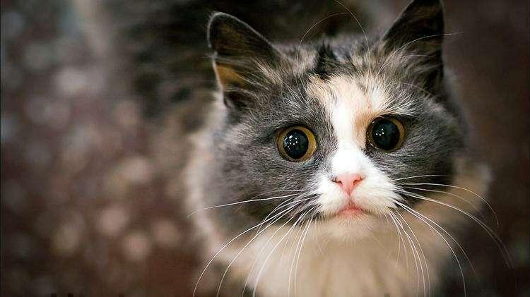 Несколько признаков того, что ваш кот вас обожает
