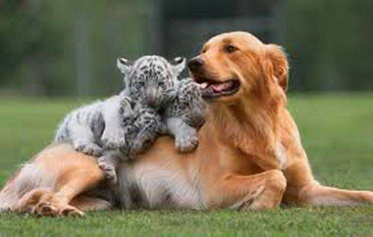 Удивительные примеры необычной дружбы среди животных