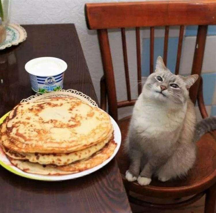 17 смешных котов, которые иногда творят странные, но безумно забавные вещи