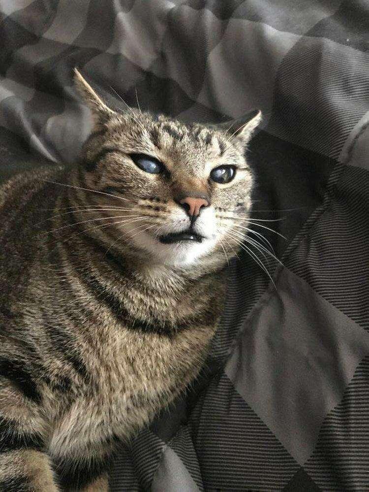 20 милых и смешных животных, которые поднимают настроение не хуже комедии