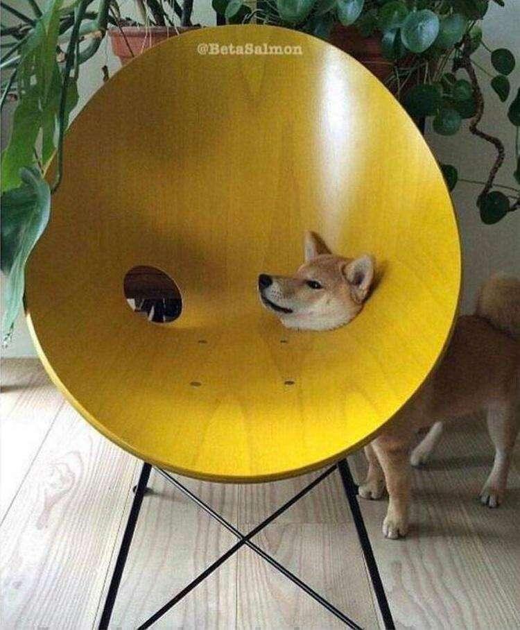 20 раз, когда кошки, собаки и другие животные вели себя как полные идиоты и это весело