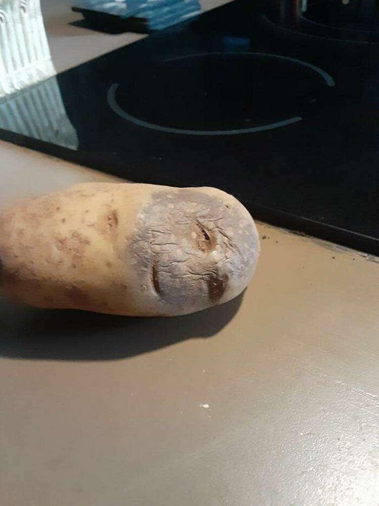 16. Дряхлая картофелина