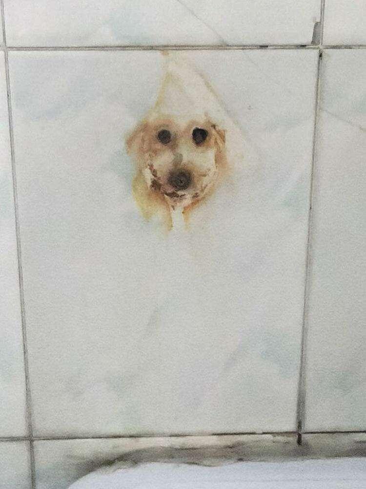 15. Классный рисунок собаки! Хотя это просто ржавчина