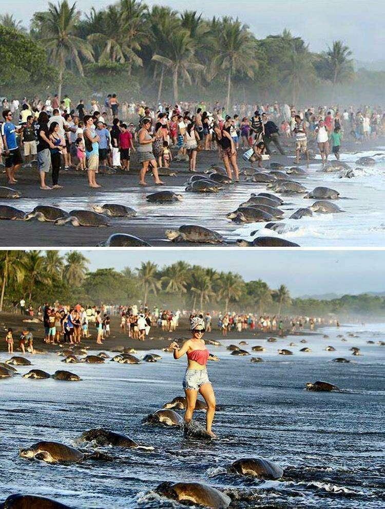 Туристы помешали черепахам откладывать яйца