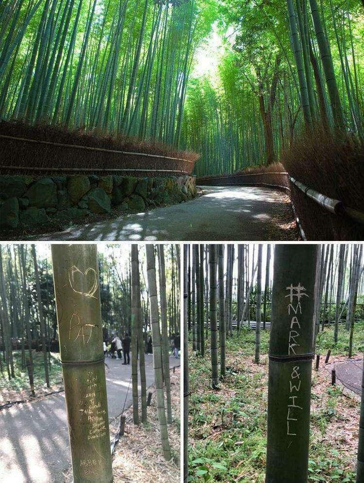 Автографы на бамбуке