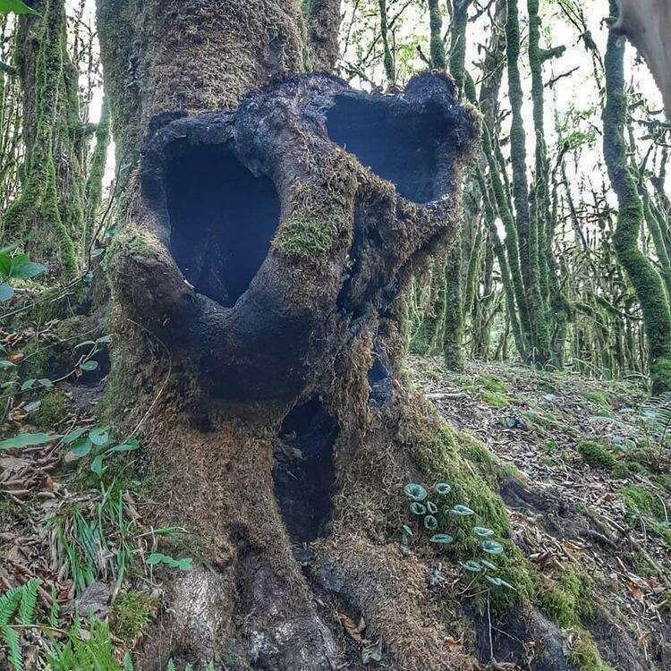 20 загадочных находок, которые люди случайно обнаружили в лесу