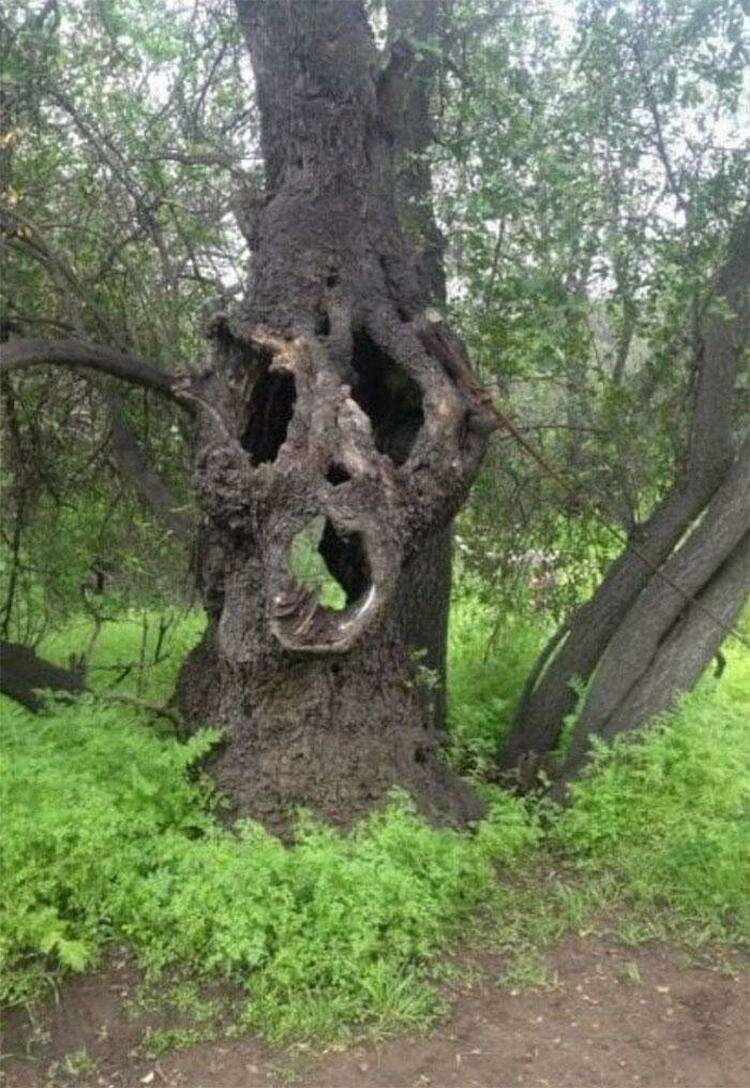 17. Дерево хочет что-то нам сказать