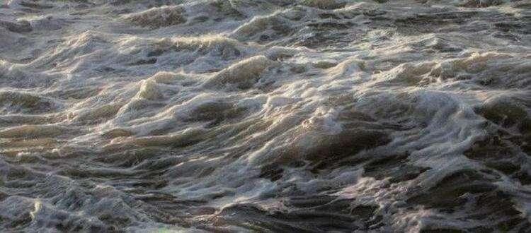 Живое море Рэна Ортнера