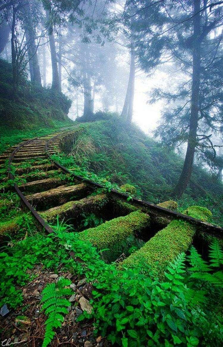 30 завораживающих фото, на которых природа победила в битве с цивилизацией