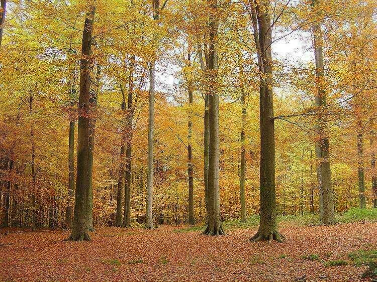 Суаньский лес