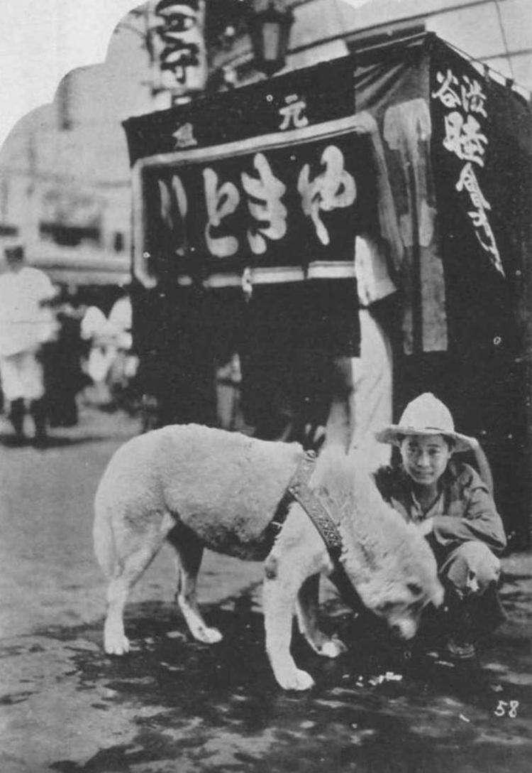 Очень редкие фотографии Хатико, символа верности и бесконечной любви