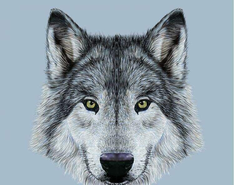 Какому духу животного соответствует ваша дата рождения