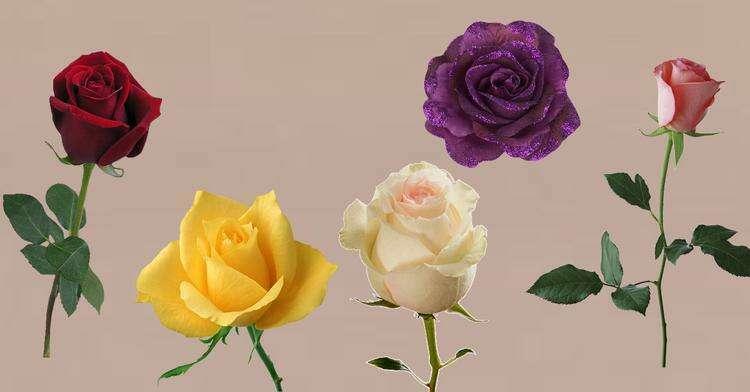 Понравившаяся роза поведает, когда исполнится ваше заветное желание - Страница 2 из 2