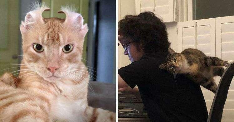 16 фотографий котов, которые точно знают, как не заставить своего хозяина скучать