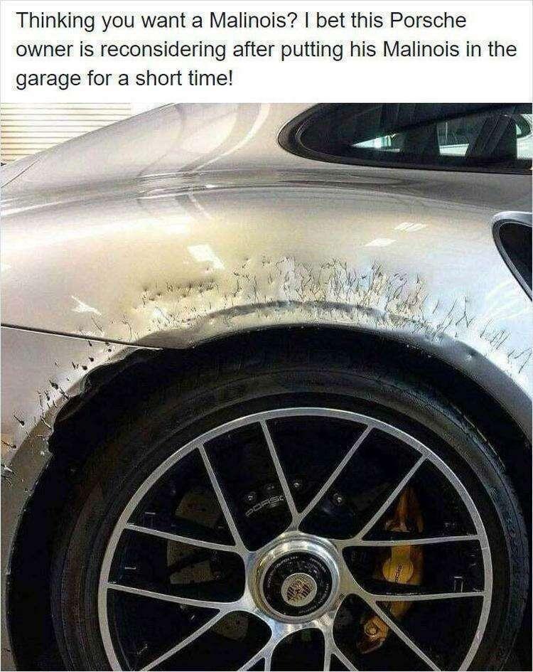 "Не запирайте собаку в гараже наедине с вашим ""Порше""!"