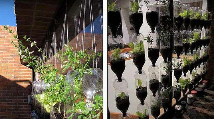 Вертикальная подвесная грядка из пустых бутылок. Фото автора