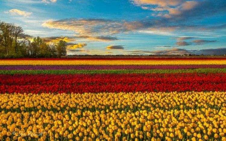 10 самых счастливых стран мира