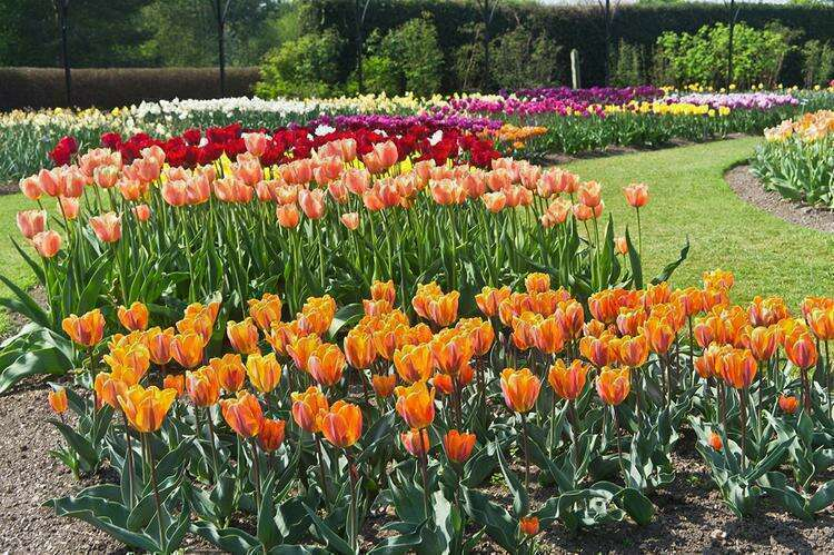 Национальный ботанический сад Ирландии