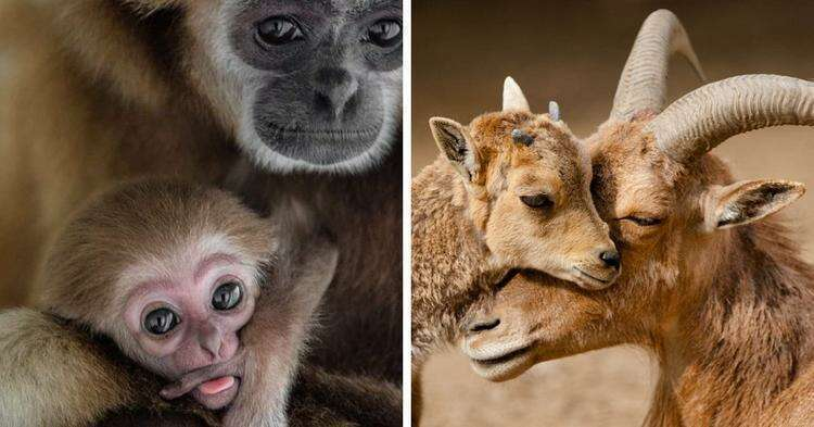 Фотограф из Македонии показывает родительскую любовь в мире животных, и это милота нечеловеческого уровня