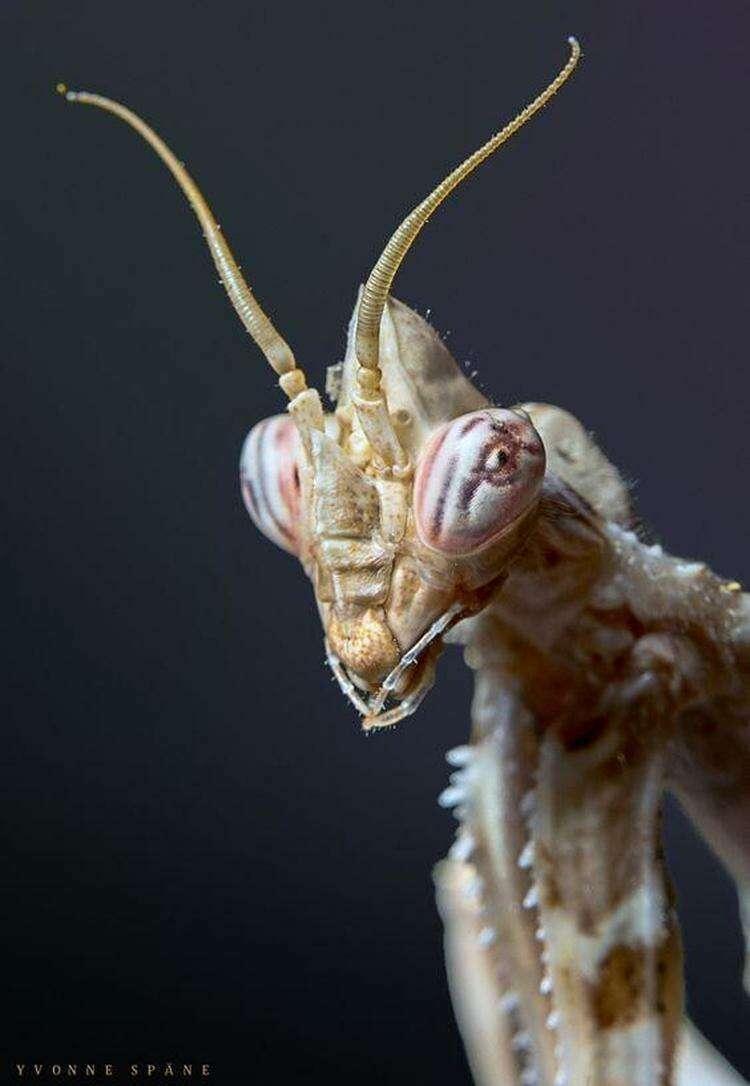 25 портретов фантастических насекомых нашей планеты