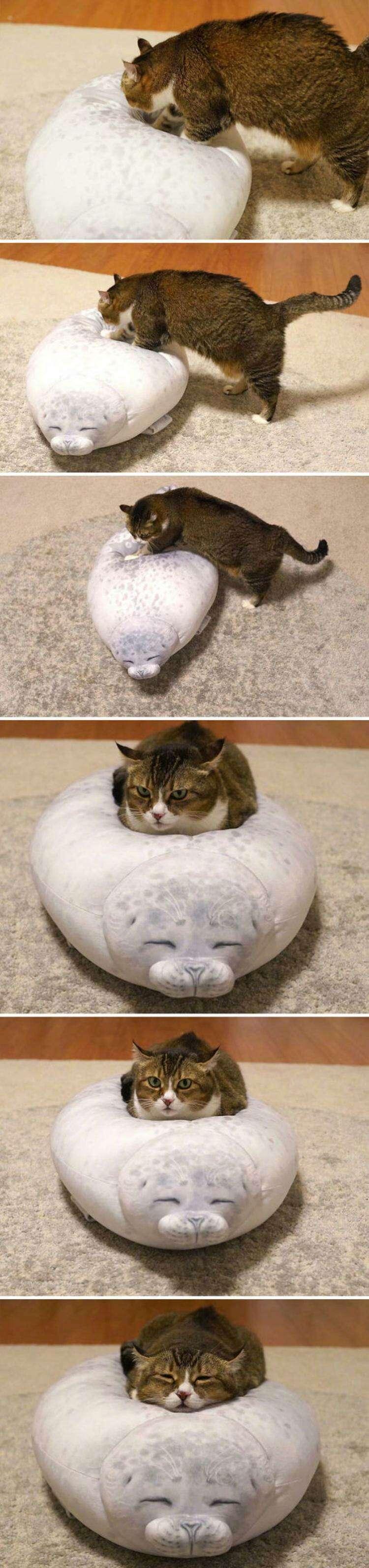 Двадцать смешных ситуаций, где главные роли сыграли кошки