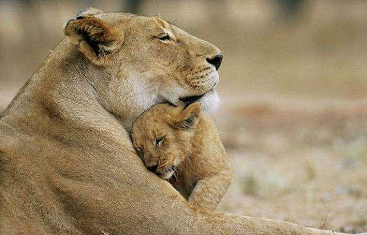 Мамы всегда будут мамами. Причем не важно, человеческая ты мать или мама животного
