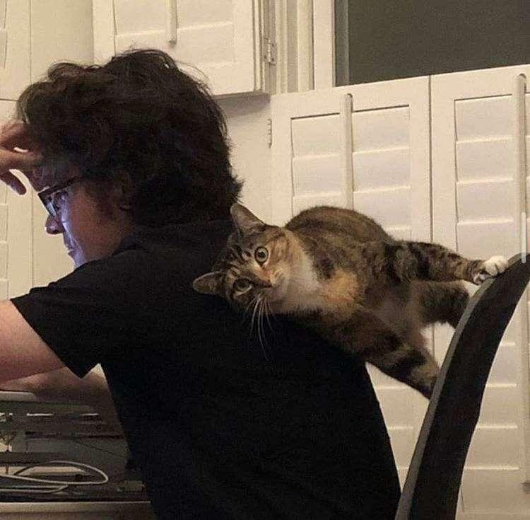 15+ забавных фотографий котов, которые точно знают, как не заставить своего хозяина скучать