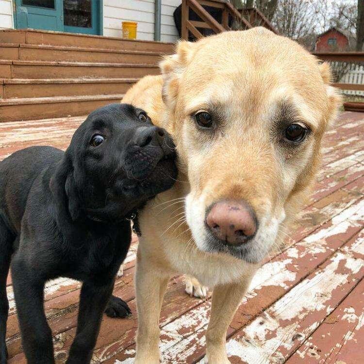 15+ забавных фото собачьих братьев и сестёр, которые явно не в восторге от своих родственников