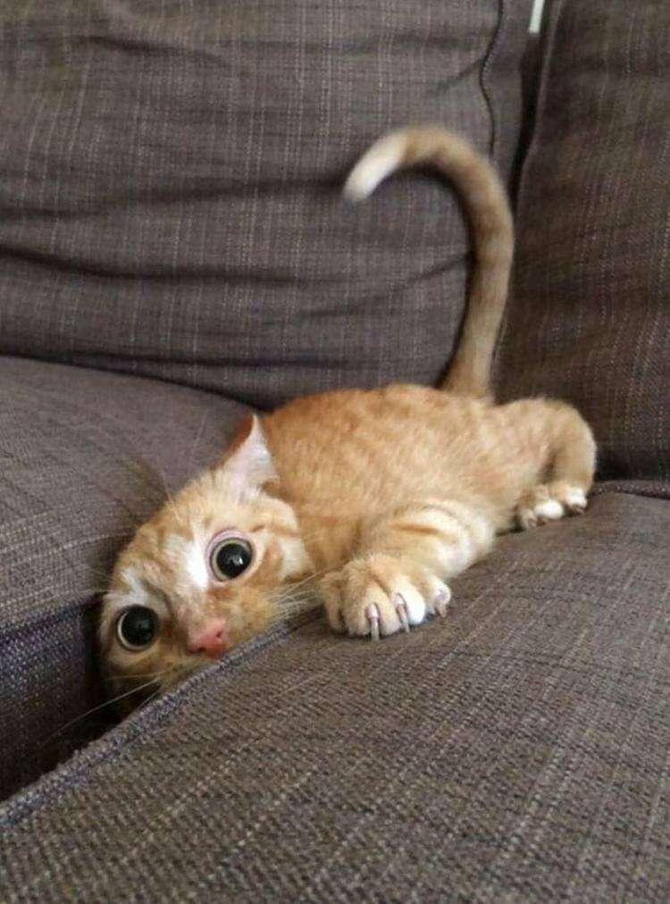 20 очаровательных маленьких котят, которые вот-вот ринутся в атаку и она, скорее всего, не будет слишком коварной
