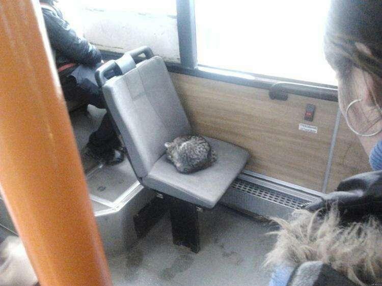 Если вам скучно в транспорте, посмотрите вокруг себя