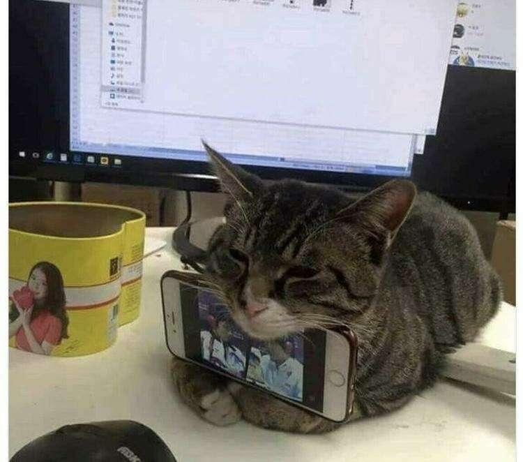 1. Для чего на самом деле нужны коты