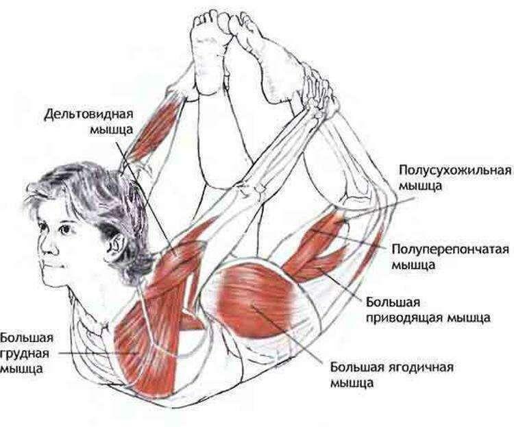 5 упражнений для профилактики и лечения заболеваний щитовидной железы