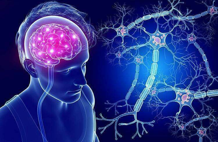 Нервные клетки восстанавливаются: Как запустить производство новых нейронов