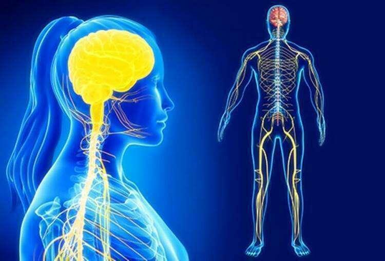 Почему для здоровья мозга и нервной системы вам нужно тренировать мышцы ног