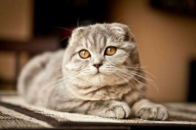 ТОП самых красивых имён для кошек-девочек – 10 кличек для разных видов и пород